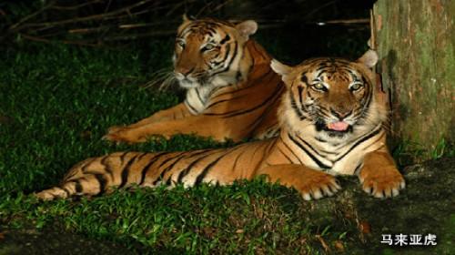 【绵阳】新加坡夜间动物园电子票-携程旅游度假