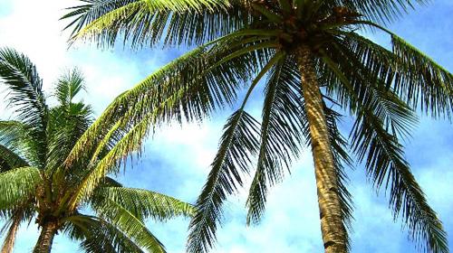 菲律宾长滩岛 _菲律宾长滩岛风景图片