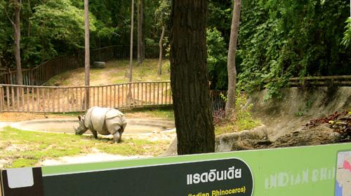 位于素贴山下的清迈夜间动物园占地近百亩
